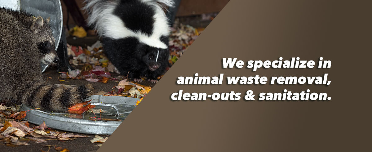 A skunk and racoon rummaging through a partially full trash can wit the text 'We specialize in animal waste removal, cleanouts and sanitization'